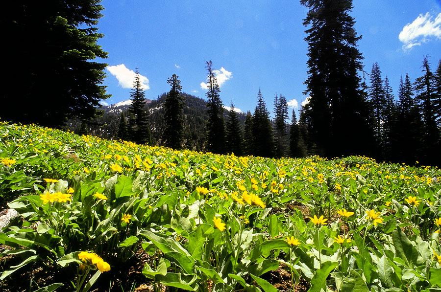 Hiking to Mill Creek Falls, Lassen Volcanic National Park (Day 37)