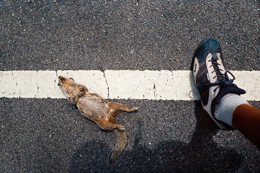 Road Kill #78, Burney (Day 39)