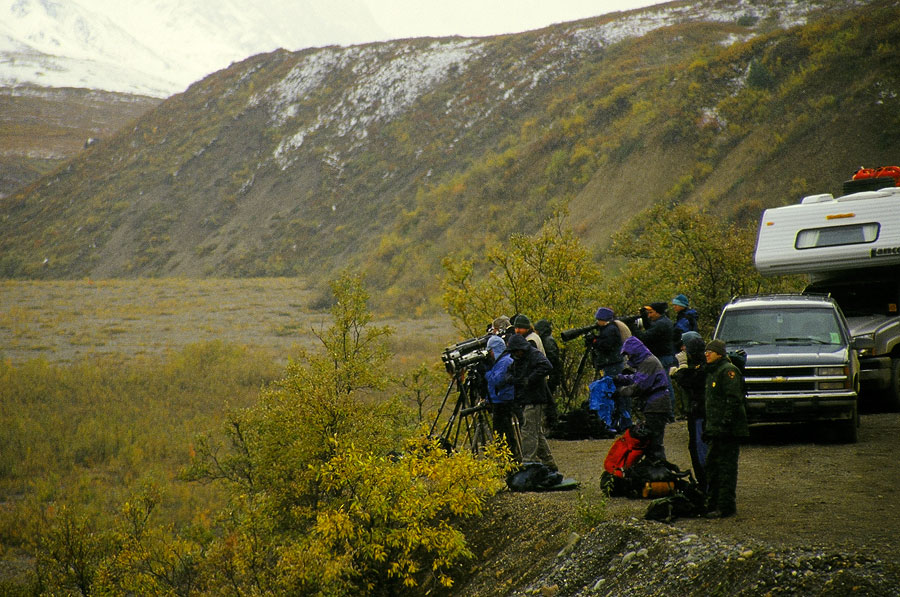 A National Geographic photographer's wet dream, Denali National Park (Day 111)