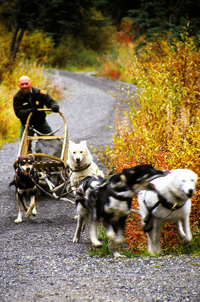 Sled dog team, Denali National Park (Day 111)