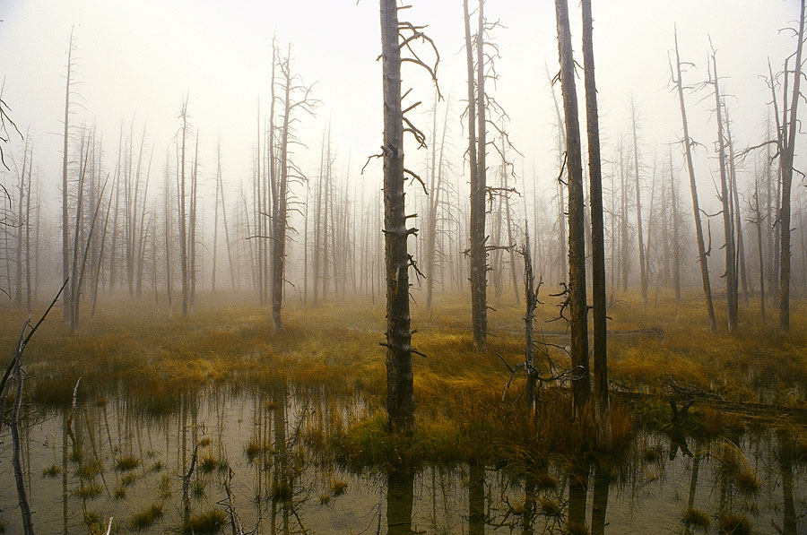 Early morning, Yellowstone National Park (Day 149)