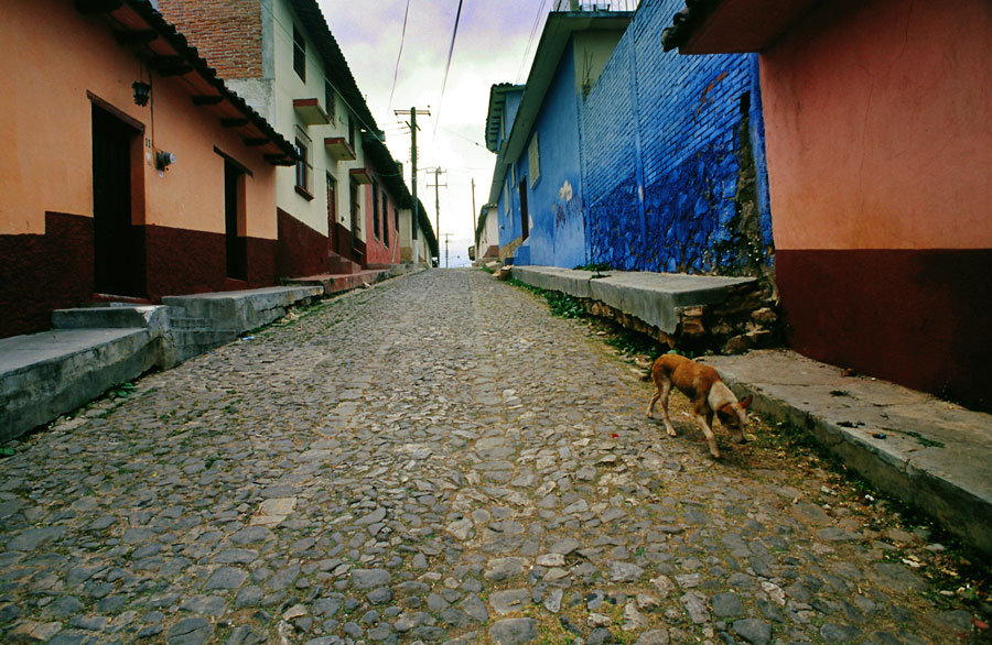 Stray dog in a San Cristobal street (Day 197)
