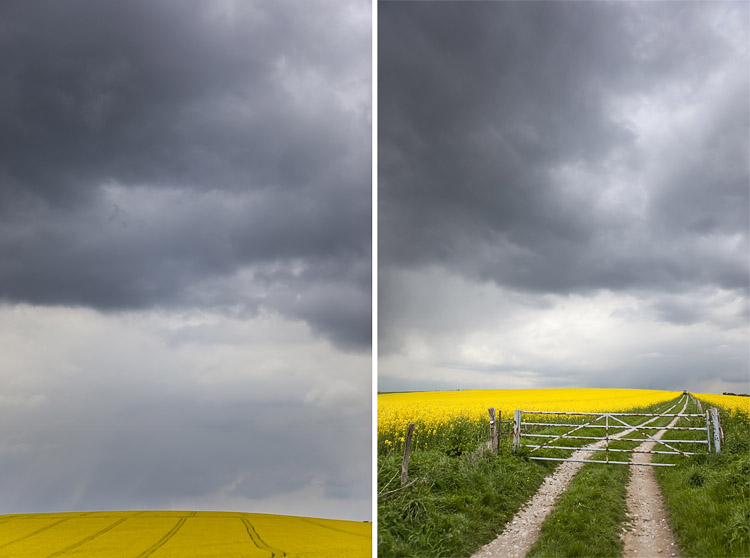 Brighton Ditchling Beacon Rapeseed Field