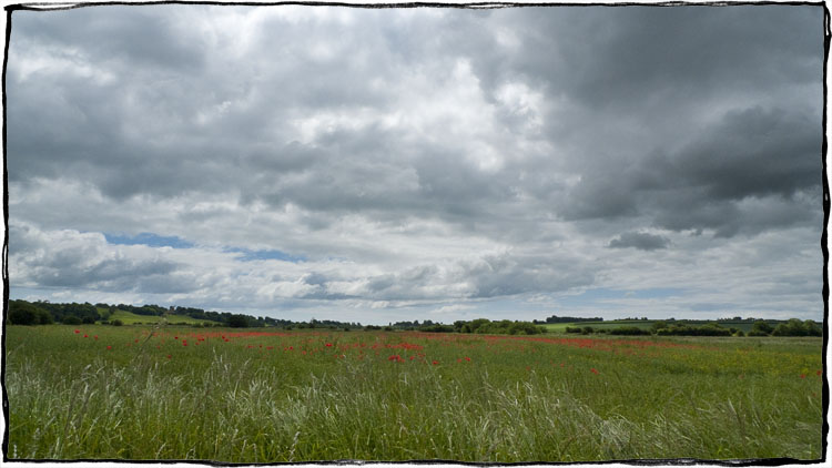 Bicycle Touring East Sussex - Poppies
