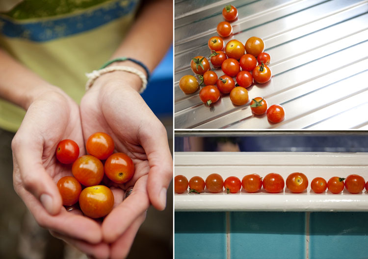 Freshly picked cherry tomatoes from our Brighton garden