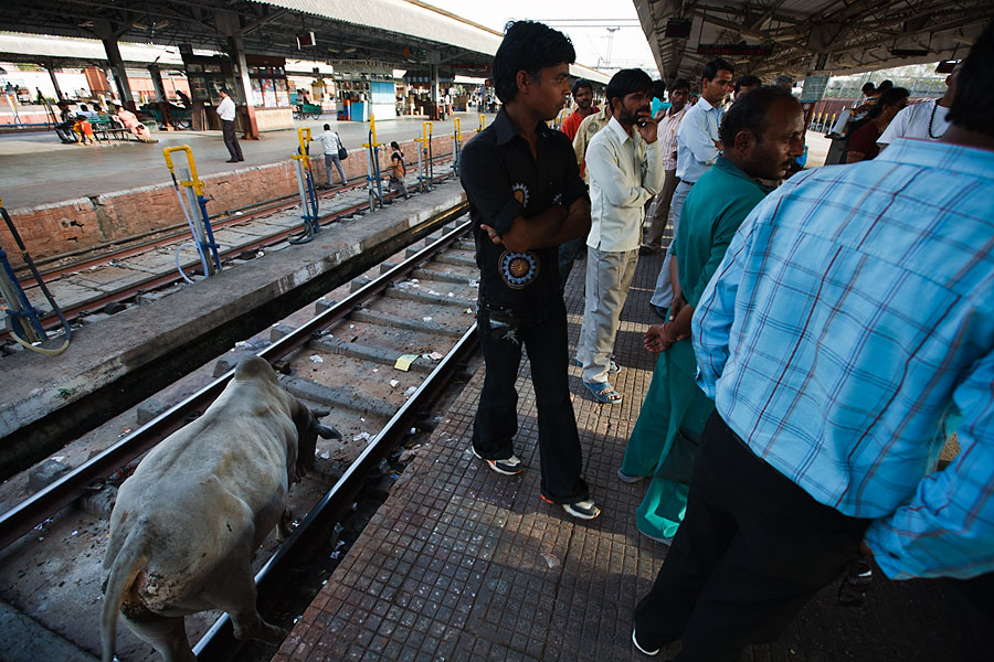Delhi train station with a cow on the tracks