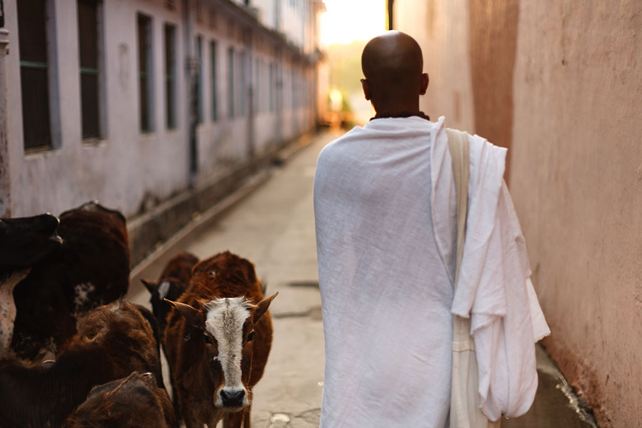 Rishikesh Dandapani walking down street at dawn passing cows