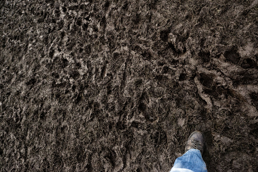 Mud at the No Direction Home Festival