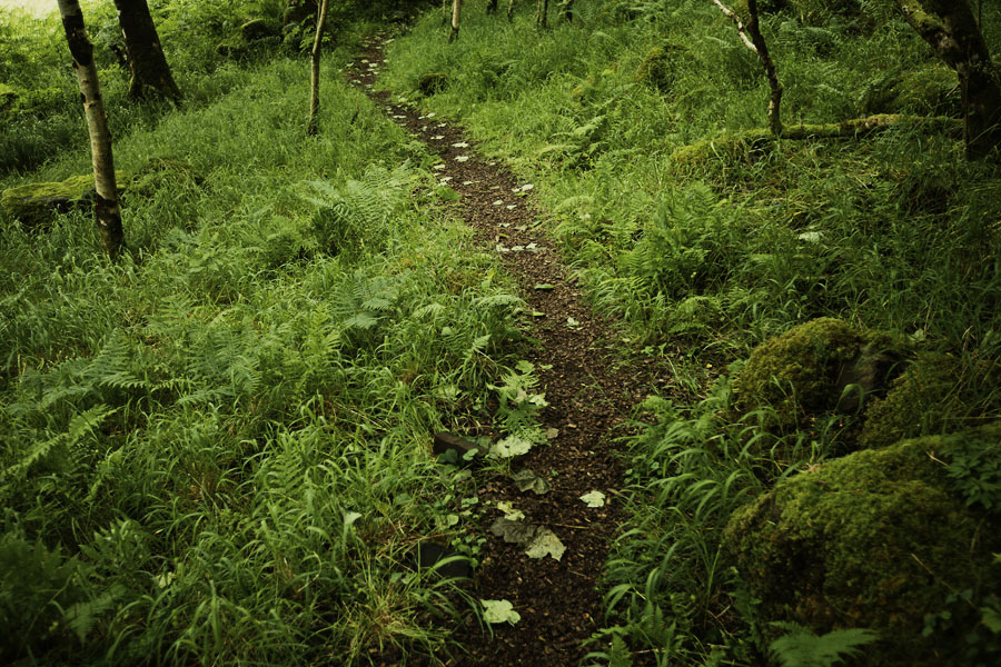 Forest trail path on Isle of Mull, Scotland